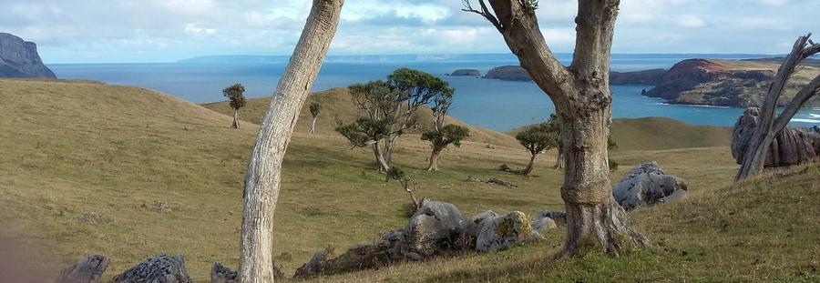 Mountain - Ecoregion
